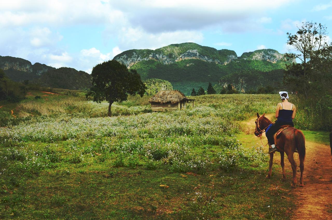 kriebelmuecke-wiese-pferd